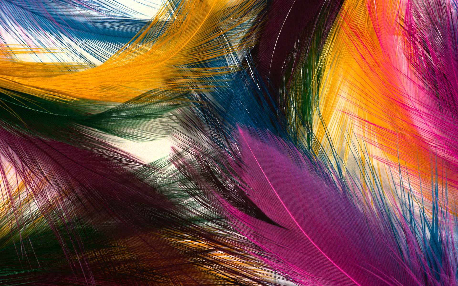 feathers wallpaper 148907
