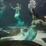 weeki-wachee-mermaids-12255B2255D