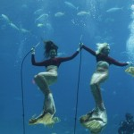 weeki-wachee-mermaids-4255B2255D