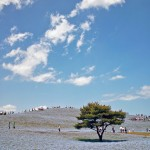hitachi-seaside-park-13255B3255D