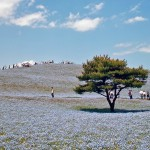hitachi-seaside-park-16255B8255D