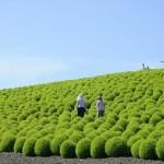 hitachi-seaside-park-7-790255B2255D