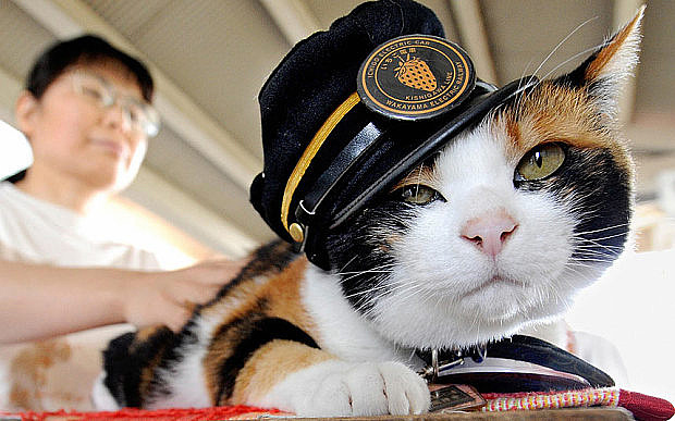 tama-cat-stationmaster in japan 2